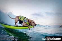 Vote for Kalei she rips!  http://www.animalcenter.org/calendar_contest_surfdog/animal_details.aspx?AID=8