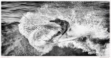 HB Surfing